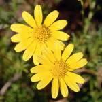 Floriterapija kao pomoć u čišćenju emocionalne toksičnosti tela